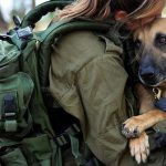 Dogs a Survival Asset