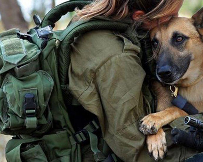 Dogs a Survival Asset